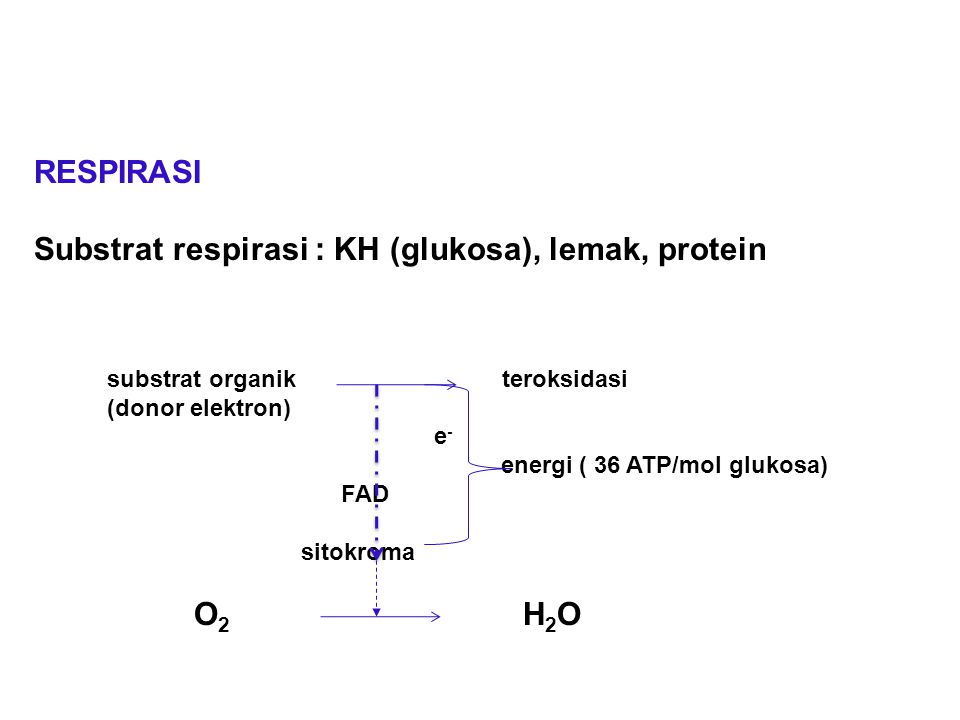 Substrat respirasi : KH (glukosa), lemak, protein