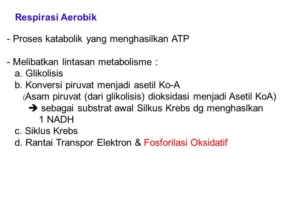 Proses katabolik yang menghasilkan ATP