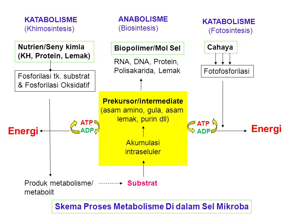 Prekursor/intermediate