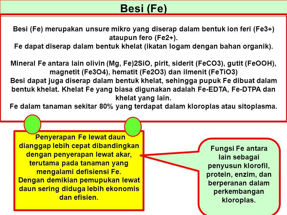 Besi (Fe) Besi (Fe) merupakan unsure mikro yang diserap dalam bentuk ion feri (Fe3+) ataupun fero (Fe2+).