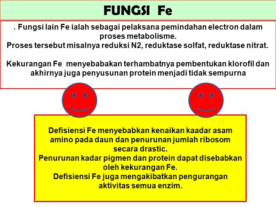 Defisiensi Fe juga mengakibatkan pengurangan aktivitas semua enzim.