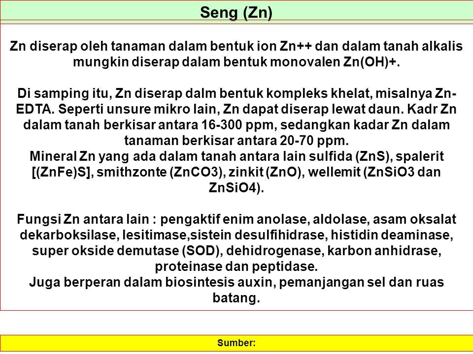 Seng (Zn) Zn diserap oleh tanaman dalam bentuk ion Zn++ dan dalam tanah alkalis mungkin diserap dalam bentuk monovalen Zn(OH)+.