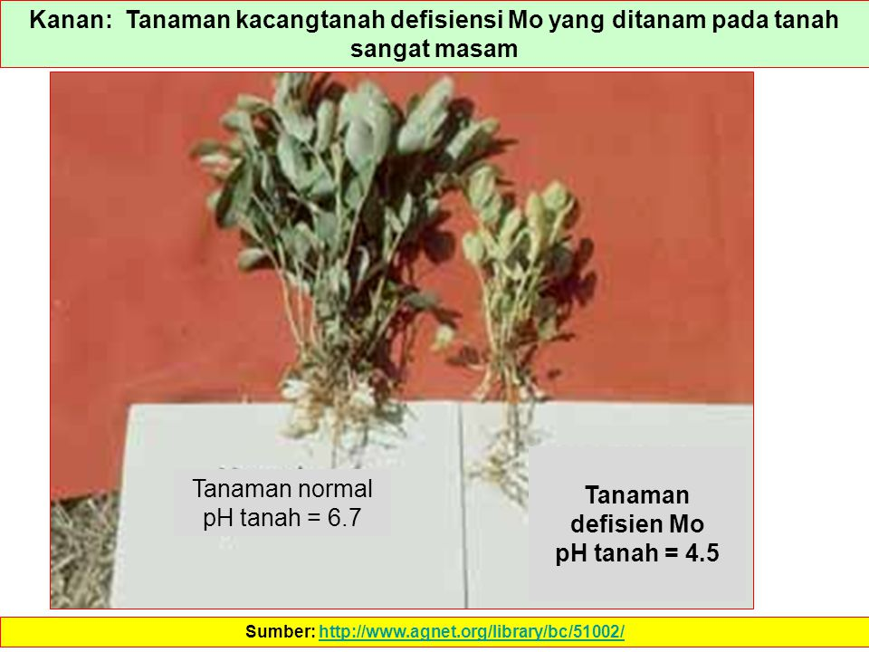Sumber: http://www.agnet.org/library/bc/51002/