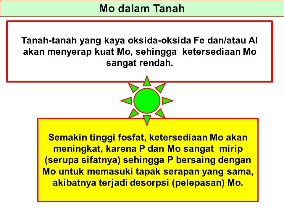 Mo dalam Tanah Tanah-tanah yang kaya oksida-oksida Fe dan/atau Al akan menyerap kuat Mo, sehingga ketersediaan Mo sangat rendah.