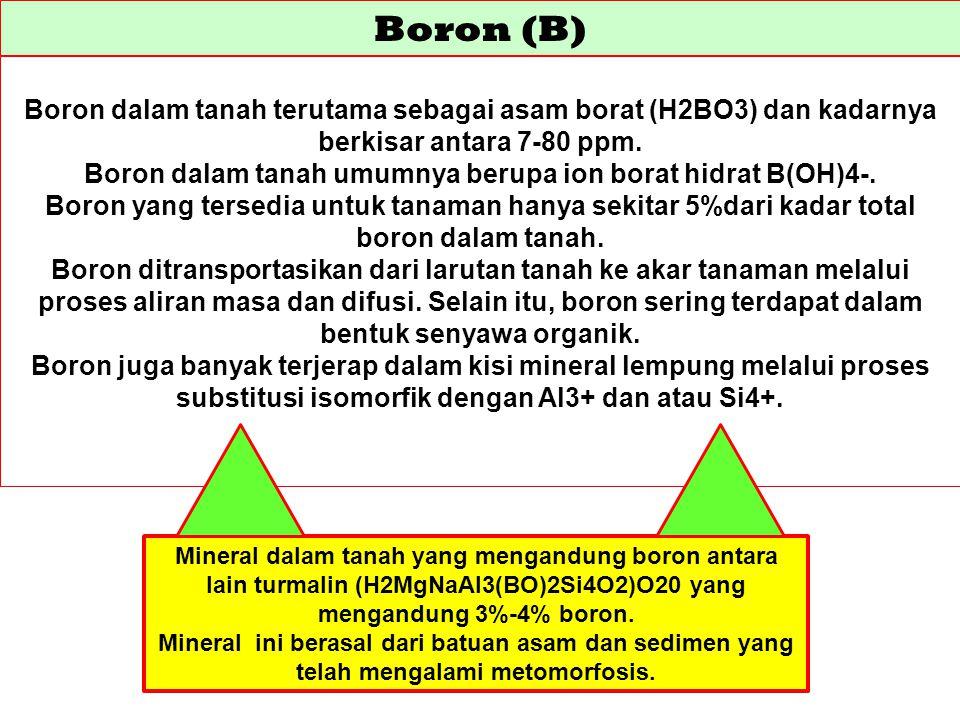 Boron dalam tanah umumnya berupa ion borat hidrat B(OH)4-.