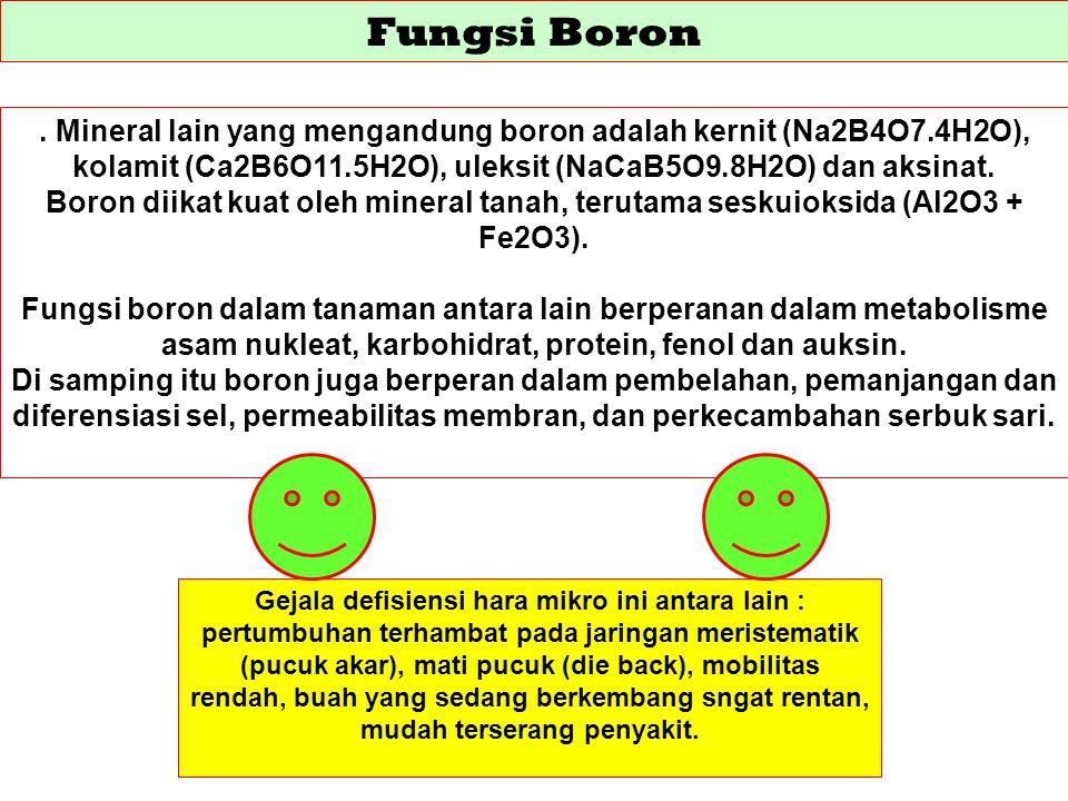 Fungsi Boron . Mineral lain yang mengandung boron adalah kernit (Na2B4O7.4H2O), kolamit (Ca2B6O11.5H2O), uleksit (NaCaB5O9.8H2O) dan aksinat.