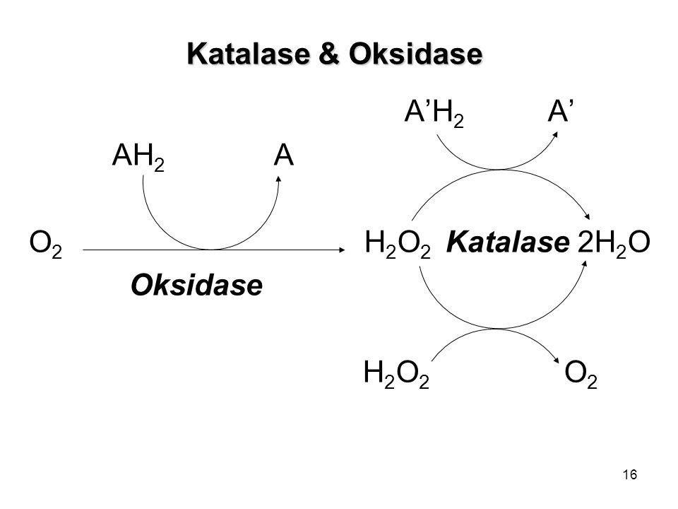 Katalase & Oksidase A'H2 A' AH2 A. O2 H2O2 Katalase 2H2O.