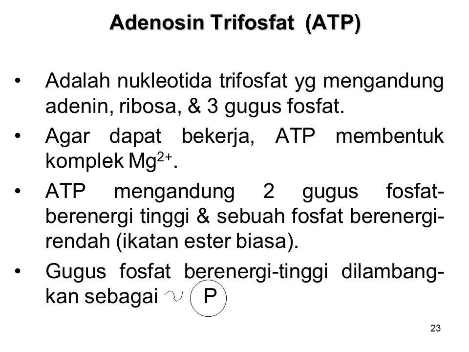 Adenosin Trifosfat (ATP)
