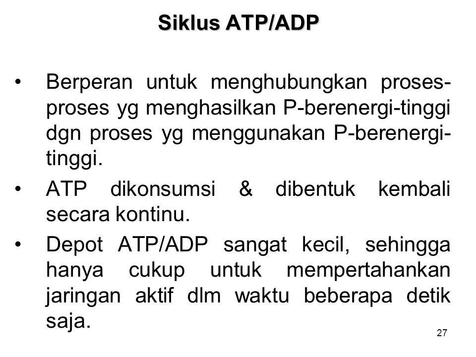Siklus ATP/ADP Berperan untuk menghubungkan proses-proses yg menghasilkan P-berenergi-tinggi dgn proses yg menggunakan P-berenergi-tinggi.