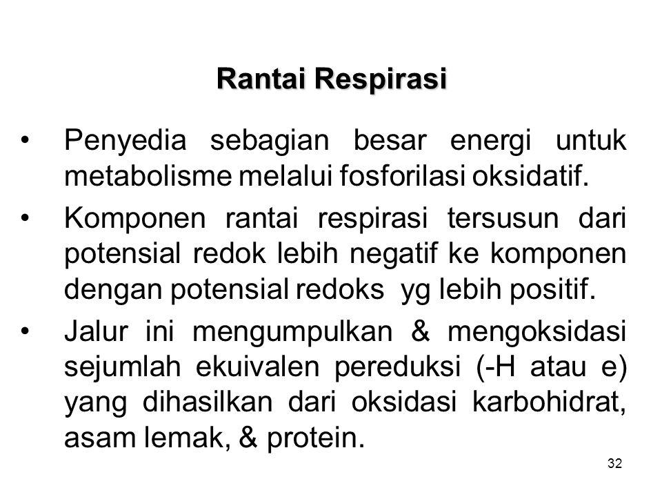 Rantai Respirasi Penyedia sebagian besar energi untuk metabolisme melalui fosforilasi oksidatif.