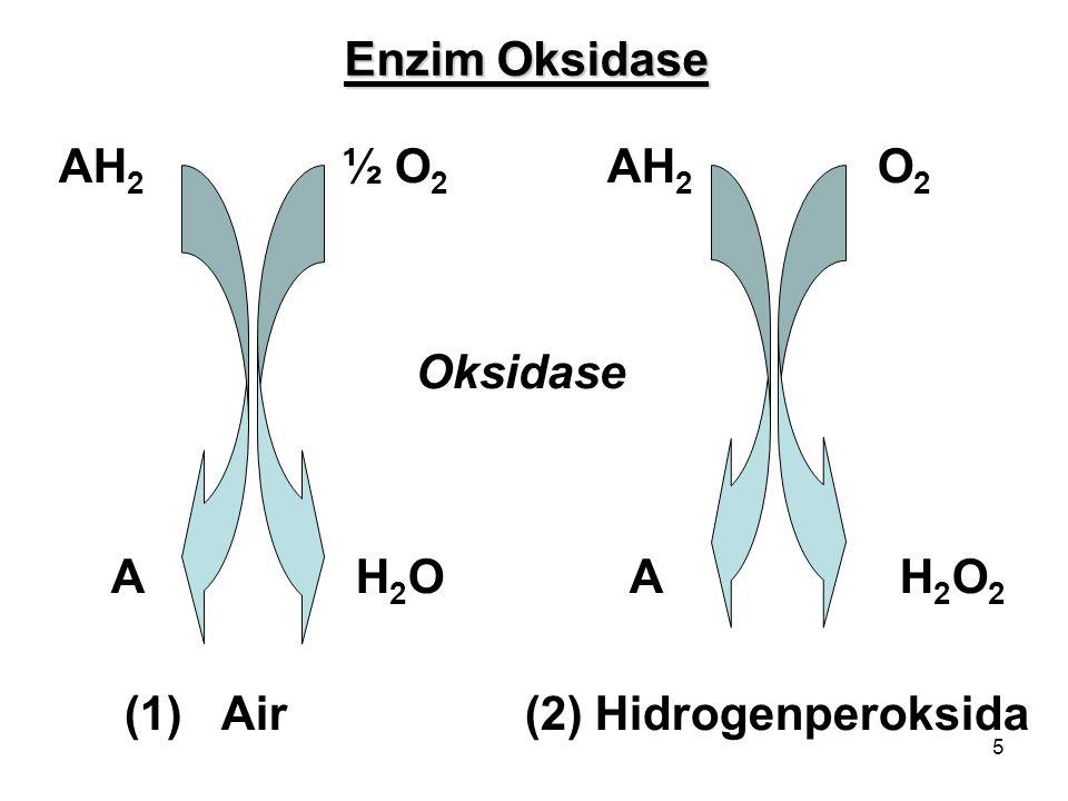 Enzim Oksidase AH2 ½ O2 AH2 O2. Oksidase. A H2O A H2O2.