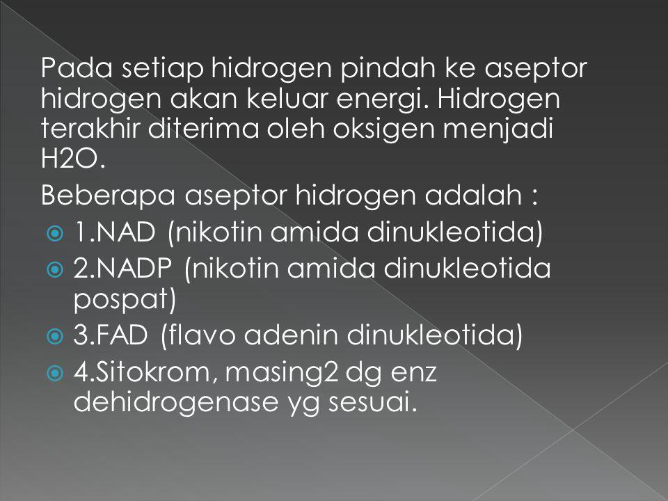 Pada setiap hidrogen pindah ke aseptor hidrogen akan keluar energi