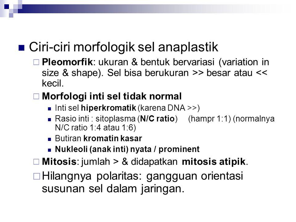 Ciri-ciri morfologik sel anaplastik