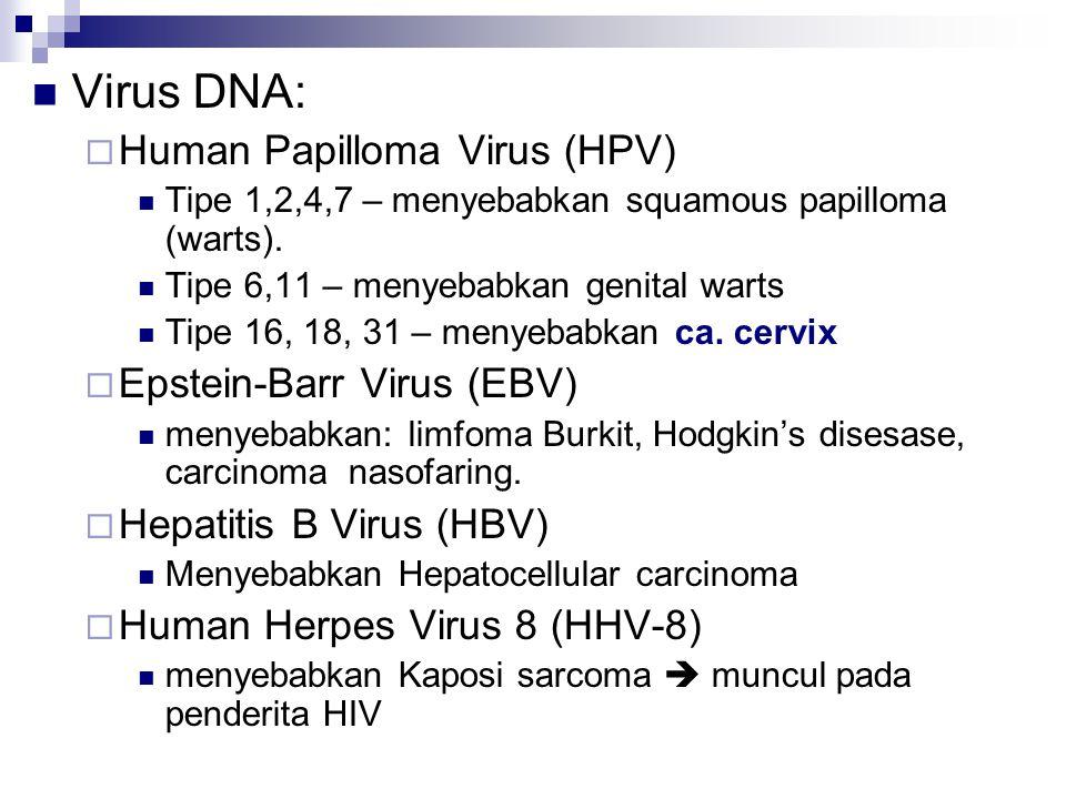 Virus DNA: Human Papilloma Virus (HPV) Epstein-Barr Virus (EBV)