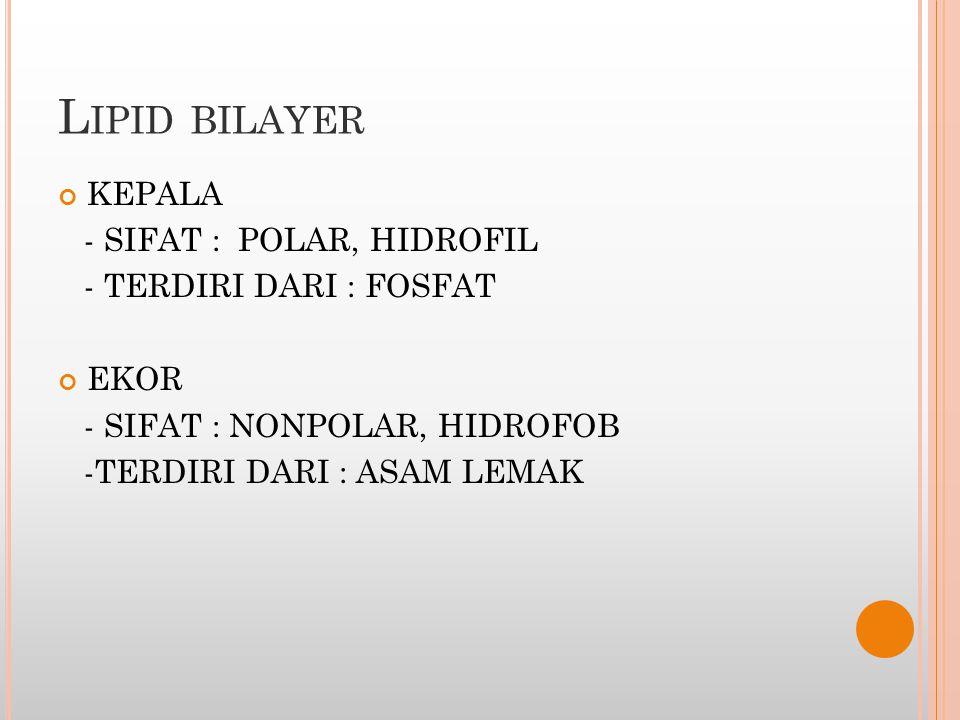 Lipid bilayer KEPALA - SIFAT : POLAR, HIDROFIL - TERDIRI DARI : FOSFAT