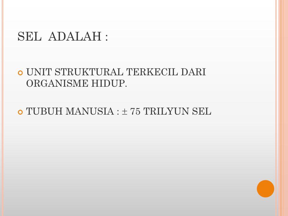 SEL ADALAH : UNIT STRUKTURAL TERKECIL DARI ORGANISME HIDUP.