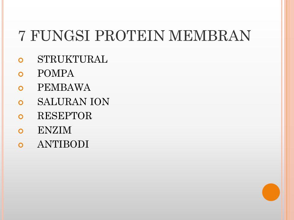 7 FUNGSI PROTEIN MEMBRAN