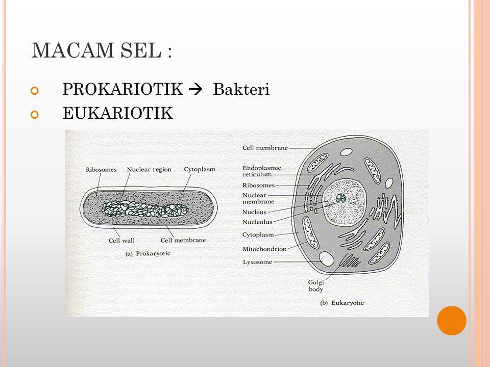 MACAM SEL : PROKARIOTIK  Bakteri EUKARIOTIK