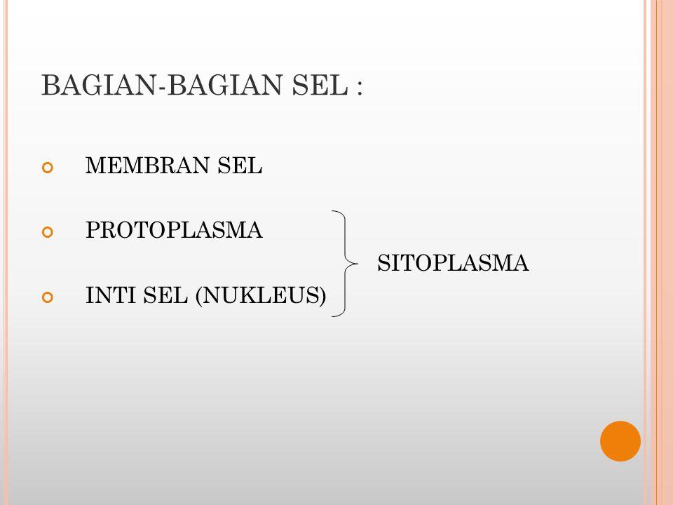 BAGIAN-BAGIAN SEL : MEMBRAN SEL PROTOPLASMA SITOPLASMA