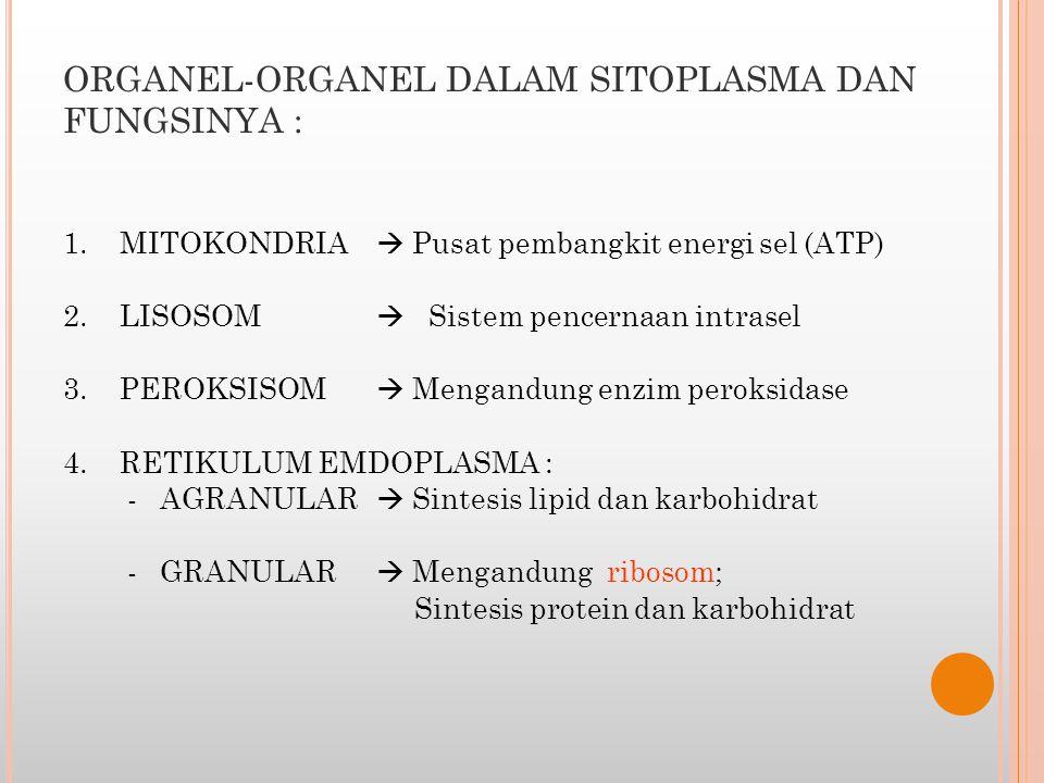 ORGANEL-ORGANEL DALAM SITOPLASMA DAN FUNGSINYA :