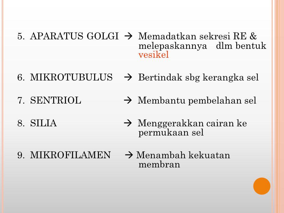 5. APARATUS GOLGI  Memadatkan sekresi RE & melepaskannya dlm bentuk vesikel 6.