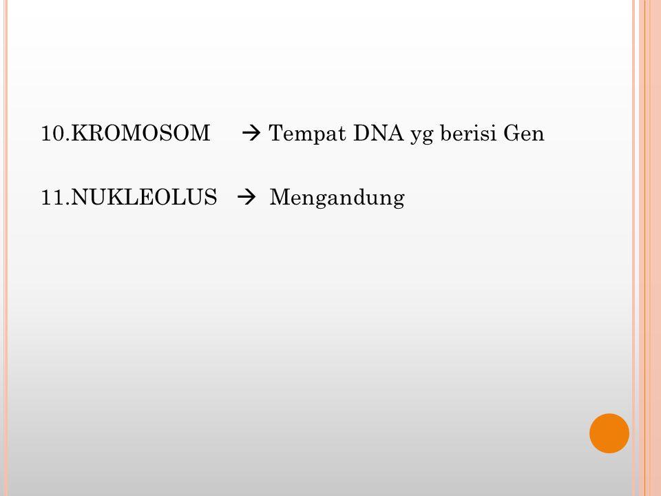 10.KROMOSOM  Tempat DNA yg berisi Gen