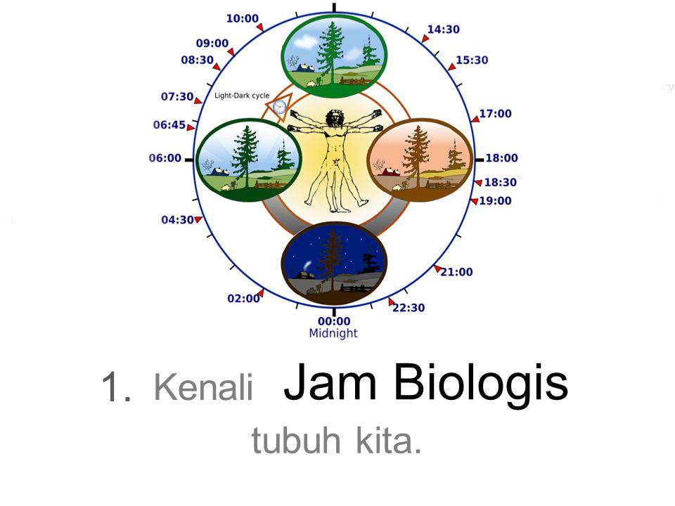 Jam Biologis 1. Kenali tubuh kita.