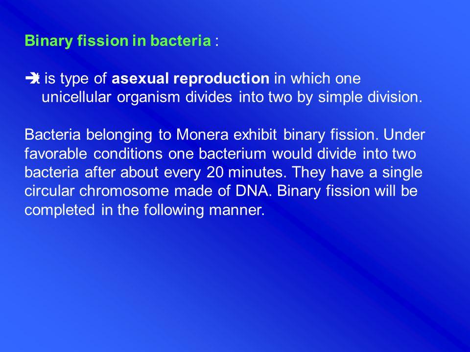 Binary fission in bacteria :