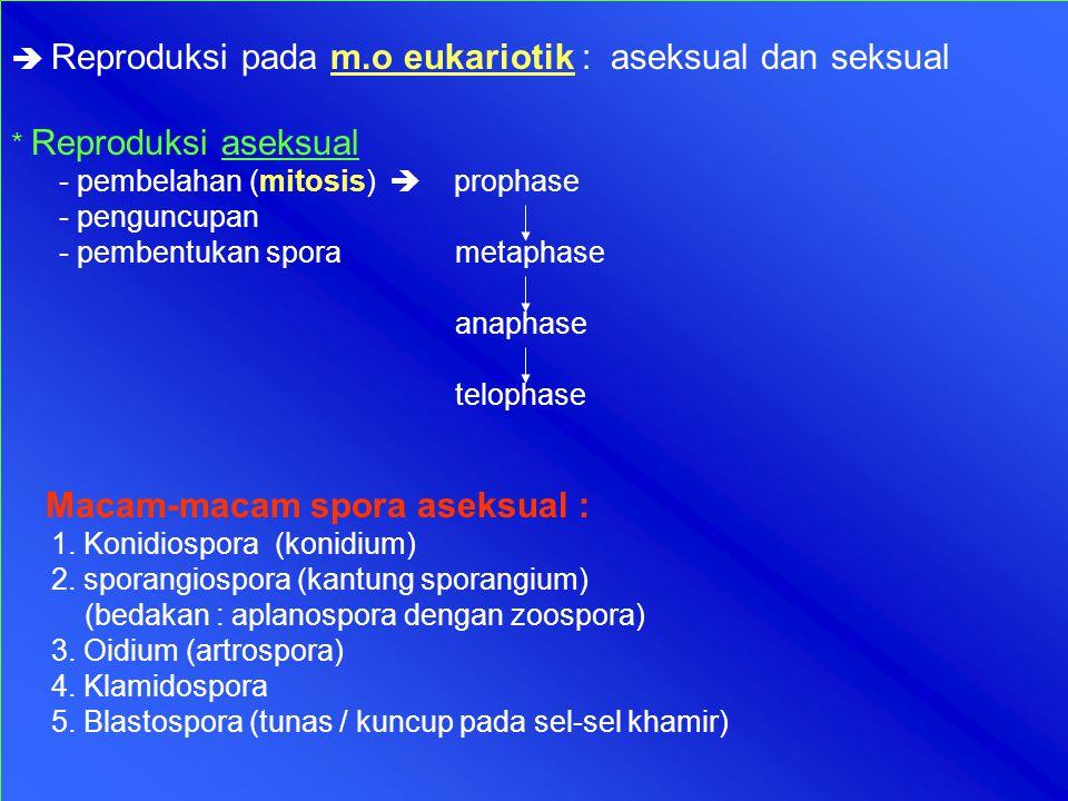  Reproduksi pada m.o eukariotik : aseksual dan seksual