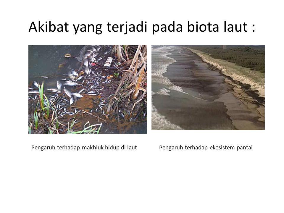 Akibat yang terjadi pada biota laut :