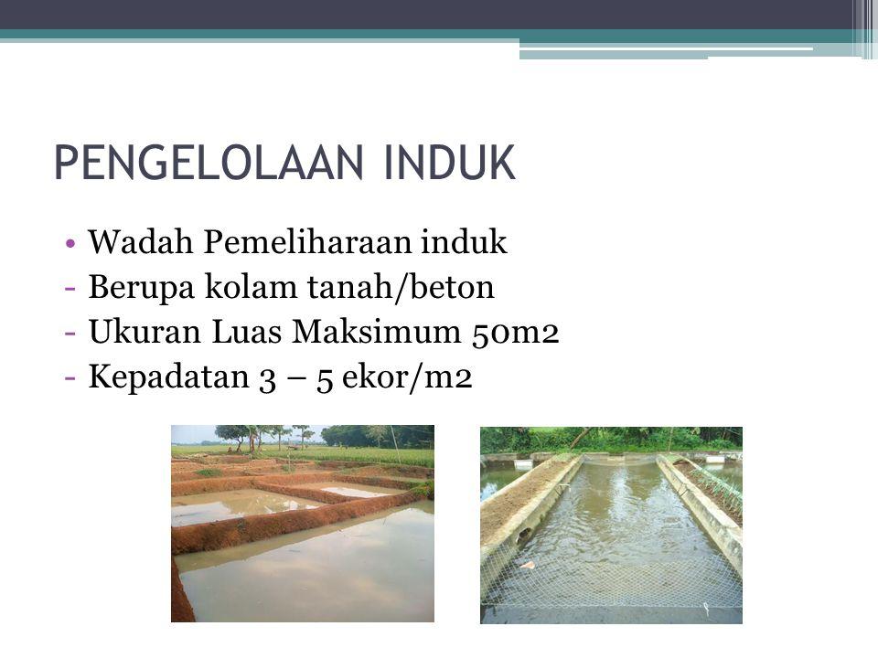 PENGELOLAAN INDUK Wadah Pemeliharaan induk Berupa kolam tanah/beton