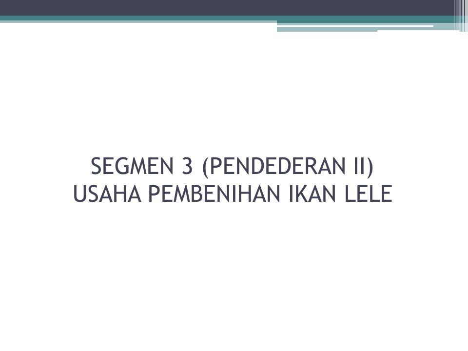 SEGMEN 3 (PENDEDERAN II) USAHA PEMBENIHAN IKAN LELE