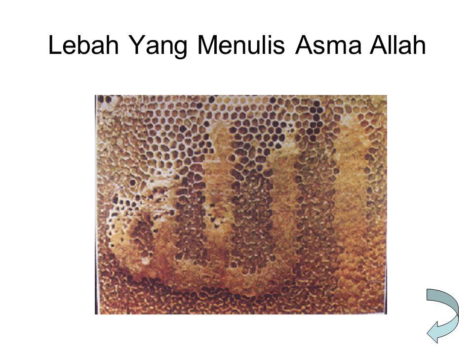 Lebah Yang Menulis Asma Allah