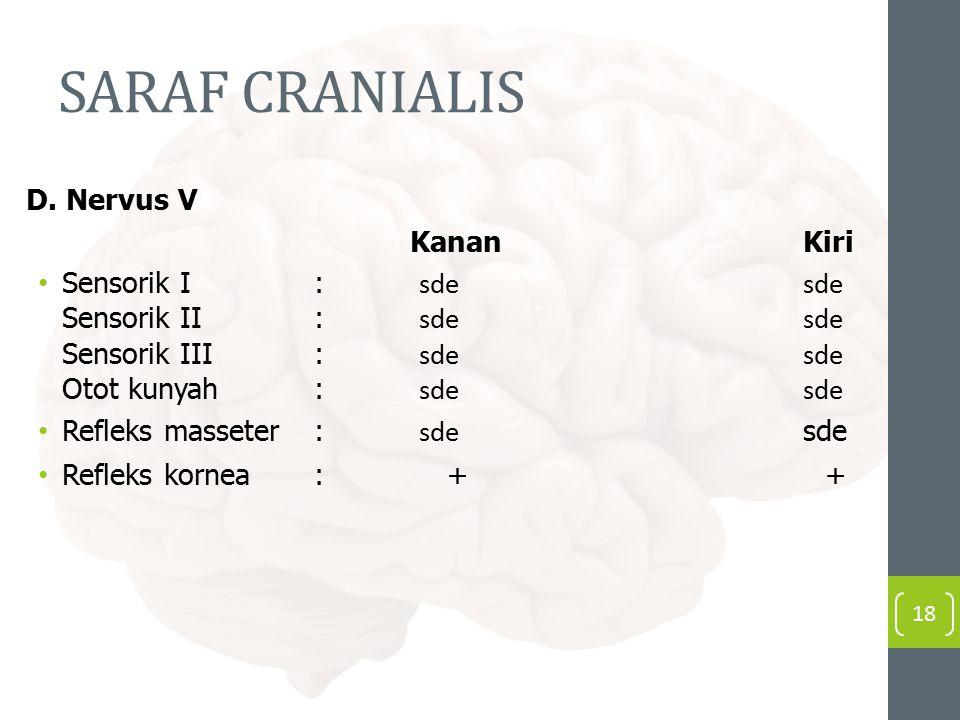 SARAF CRANIALIS D. Nervus V Kanan Kiri