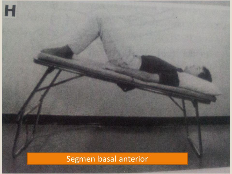 Segmen basal anterior