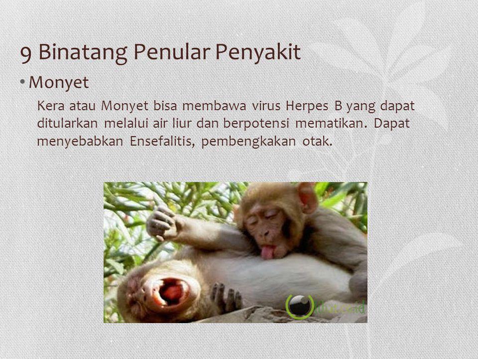 9 Binatang Penular Penyakit
