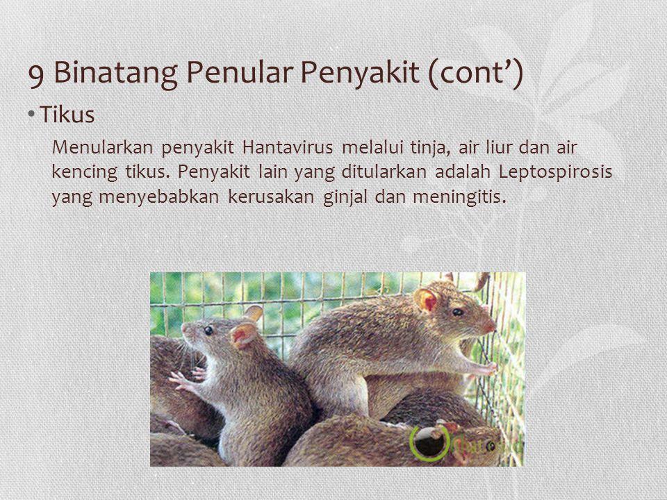 9 Binatang Penular Penyakit (cont')