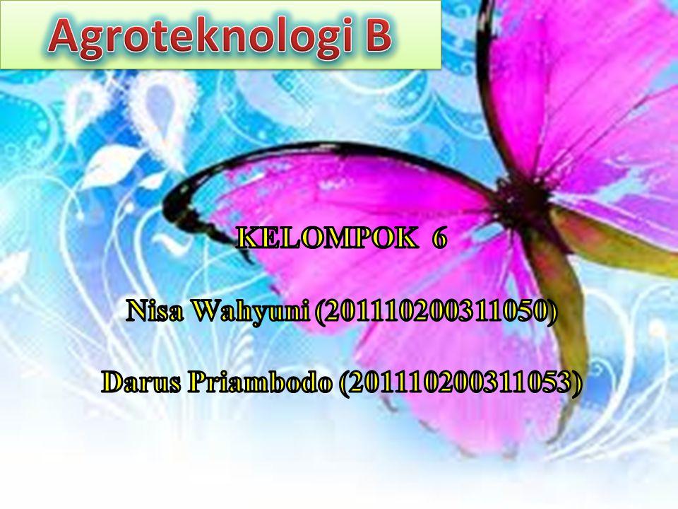 Agroteknologi B KELOMPOK 6 Nisa Wahyuni (201110200311050)