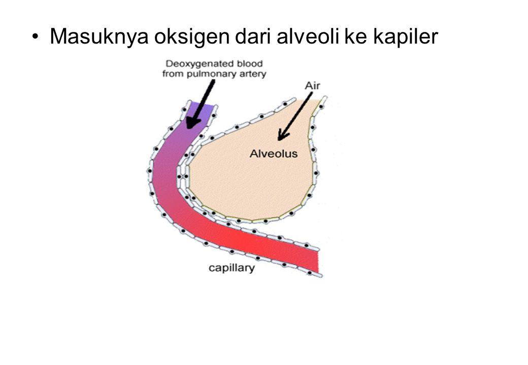 Masuknya oksigen dari alveoli ke kapiler