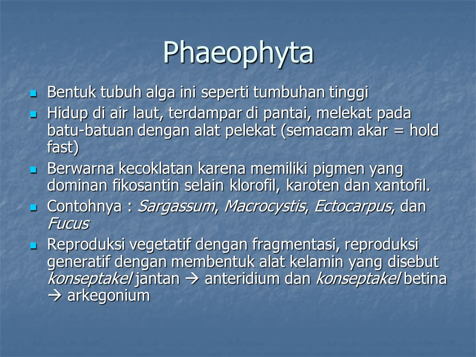 Phaeophyta Bentuk tubuh alga ini seperti tumbuhan tinggi