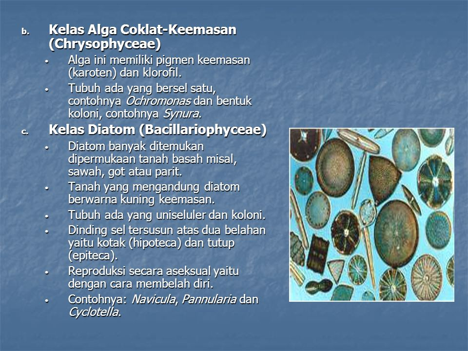 Kelas Alga Coklat-Keemasan (Chrysophyceae)