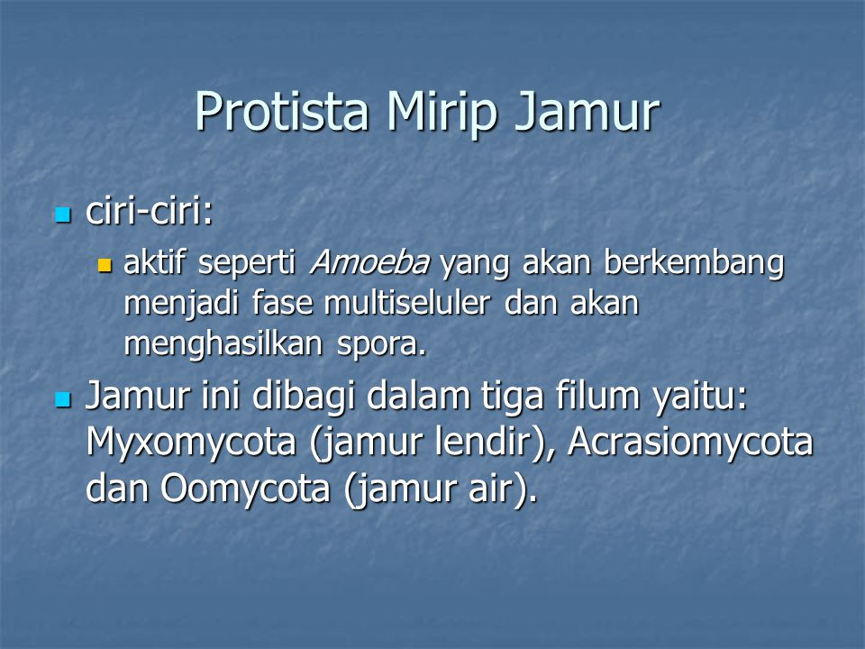 Protista Mirip Jamur ciri-ciri: