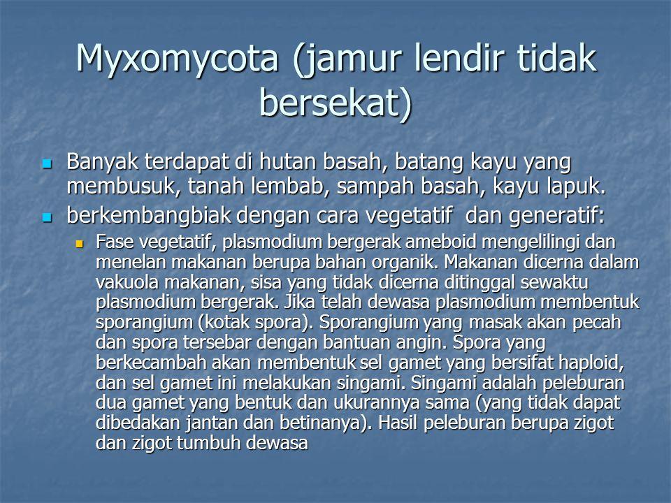 Myxomycota (jamur lendir tidak bersekat)