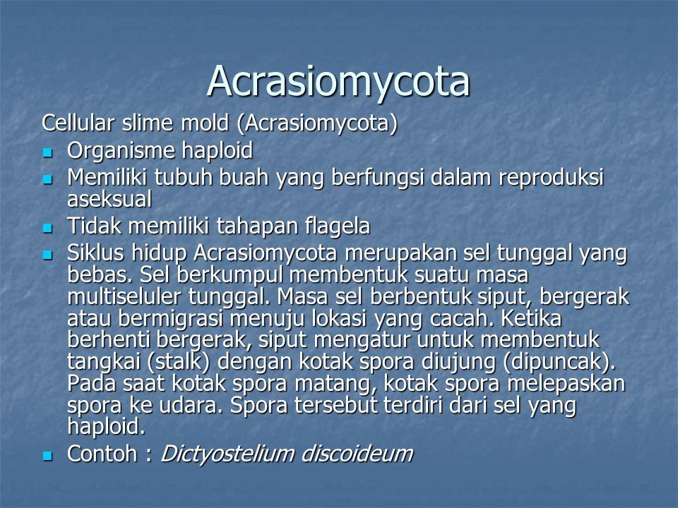 Acrasiomycota Cellular slime mold (Acrasiomycota) Organisme haploid