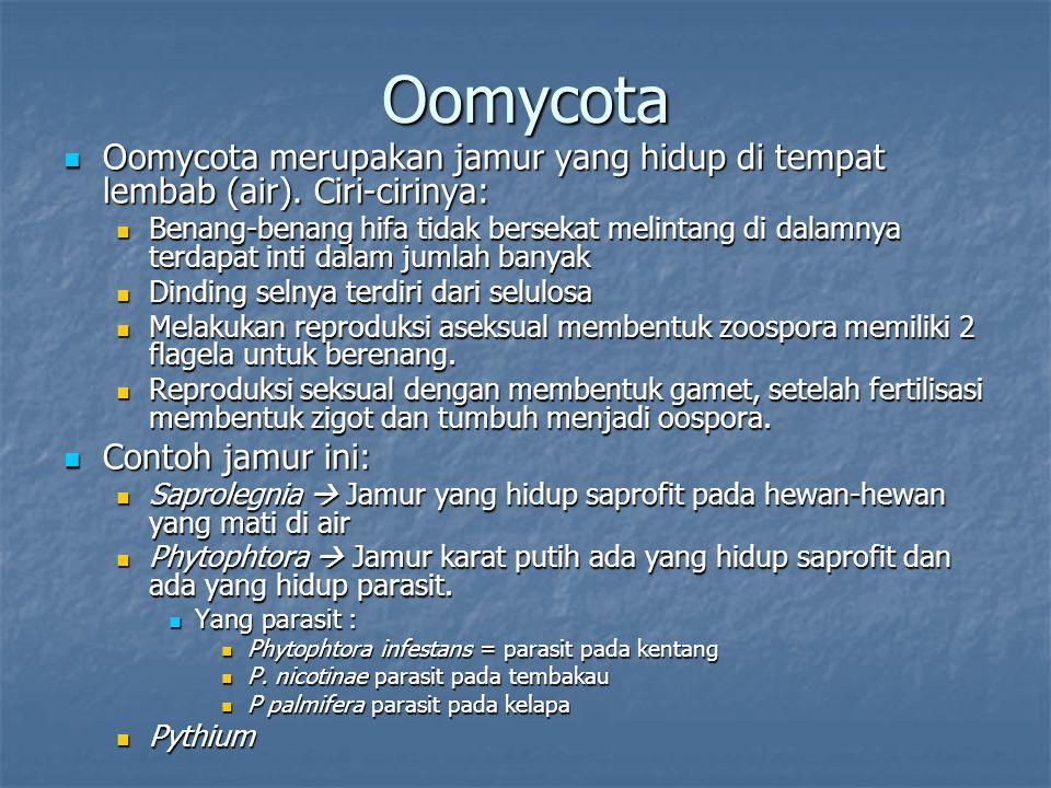 Oomycota Oomycota merupakan jamur yang hidup di tempat lembab (air). Ciri-cirinya: