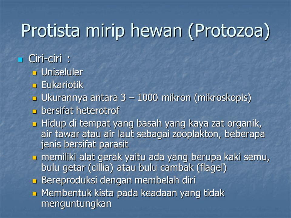 Protista mirip hewan (Protozoa)