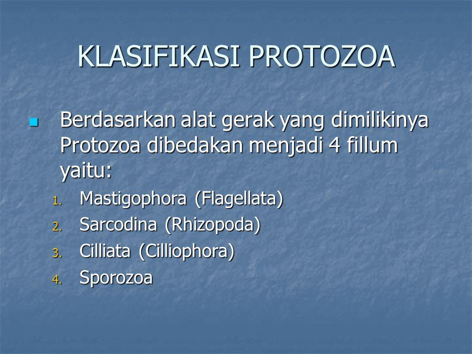 KLASIFIKASI PROTOZOA Berdasarkan alat gerak yang dimilikinya Protozoa dibedakan menjadi 4 fillum yaitu: