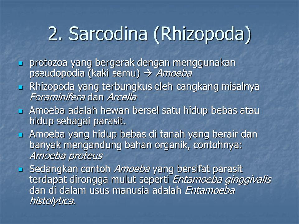 2. Sarcodina (Rhizopoda)