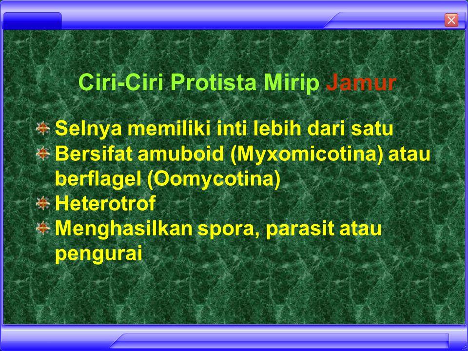Ciri-Ciri Protista Mirip Jamur