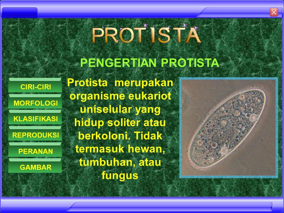 PENGERTIAN PROTISTA Protista merupakan organisme eukariot uniselular yang hidup soliter atau berkoloni. Tidak termasuk hewan, tumbuhan, atau fungus.